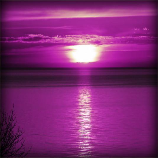 !        Purple Zontex