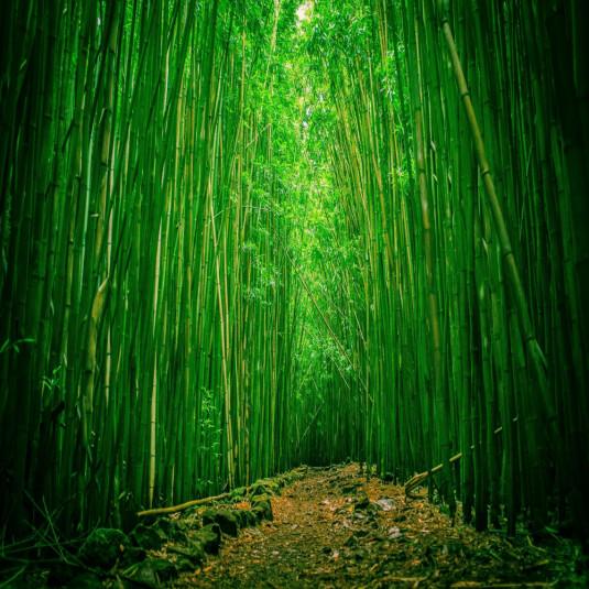 bamboo [128x]