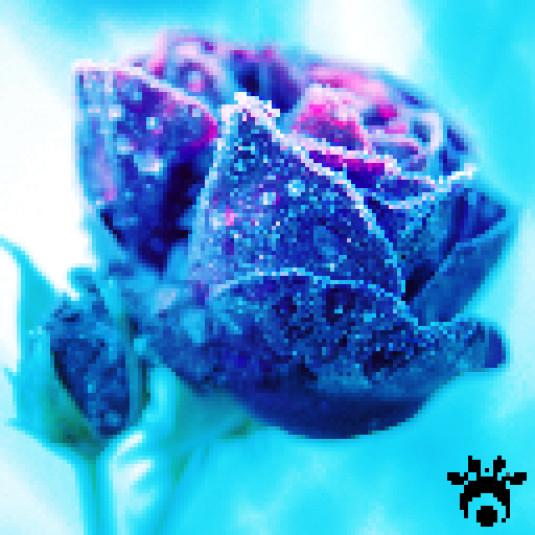 Icey Rose