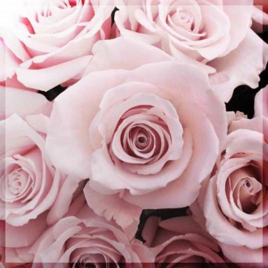 deep_rose_pack