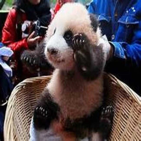 PandaPackv4