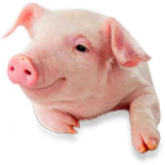 SchweinePack