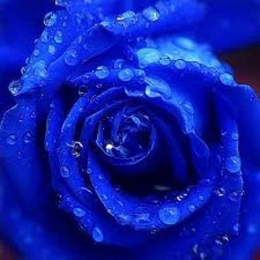 BlueUHCV1